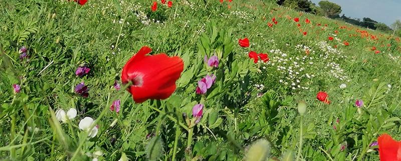fiori olfatto